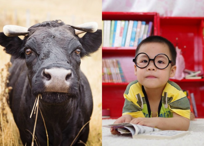 child buffalo